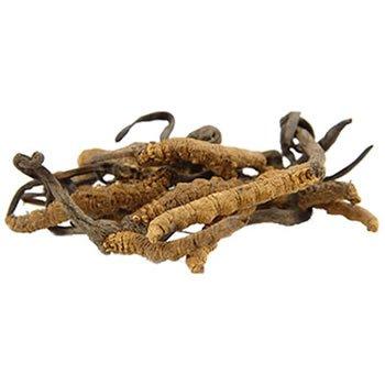 Cordiceps-Pilz